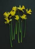 gele gele narcissen op een zwarte achtergrond Stock Afbeelding
