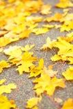 Gele gevallen bladeren op weg Stock Afbeeldingen