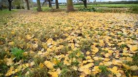 Gele gevallen bladeren in park stock videobeelden
