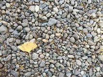 Gele Ginkgo op de rotstuin in Tokyo Royalty-vrije Stock Foto