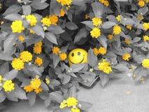 Gele glimlach Stock Foto
