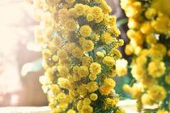Gele goudsbloem Royalty-vrije Stock Afbeeldingen