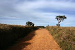 Gele grintweg in de vlaktes van parkhorton, Sri Lanka Stock Afbeelding