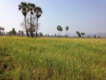 Gele hennepbloem en palmsuiker royalty-vrije stock afbeelding
