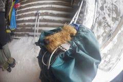 Gele hond in de Karpaten voor het Nieuwjaar Royalty-vrije Stock Afbeeldingen
