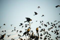 Gele Hoofdvogel stock fotografie