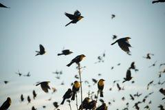 Gele Hoofdvogel stock foto