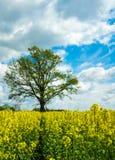 Gele Installaties met boom en hemel Stock Afbeelding