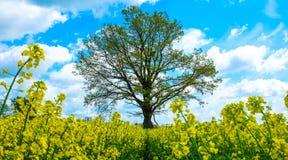 Gele Installaties met boom en hemel Stock Foto's