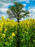 Gele Installaties met boom en hemel Royalty-vrije Stock Afbeelding