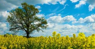 Gele Installaties met boom en hemel Stock Afbeeldingen