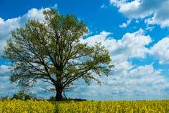 Gele Installaties met boom en hemel Stock Foto
