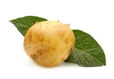 Gele jonge aardappel royalty-vrije stock afbeelding