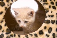 Gele kat die binnenshuis verbergt royalty-vrije stock fotografie