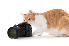 Gele kat die foto's nemen witn een dslrcamera op een witte backgroun Royalty-vrije Stock Foto's