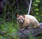 Gele Kat in Hout Stock Afbeelding