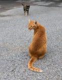 Gele kat met zwarte op de bedekte weg Royalty-vrije Stock Foto's