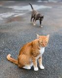 Gele kat met zwarte op de bedekte weg Stock Afbeelding