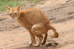 gele kat op zand Stock Foto's