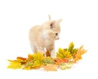Gele katje en dalingsbladeren stock foto