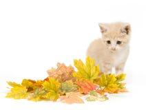 Gele katje en dalingsbladeren stock afbeelding