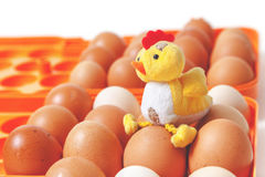 Gele kippenzitting bovenop eieren in oranje dienblad Royalty-vrije Stock Foto