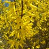 Gele kleine bloemen royalty-vrije stock afbeeldingen