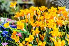 Gele Kleurrijke Bloemdecoratie Royalty-vrije Stock Afbeeldingen