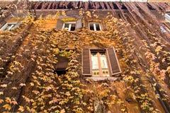 Gele klimop op de voorgevel van huis Stock Afbeelding