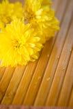 Gele knoppen op bamboe Stock Foto's