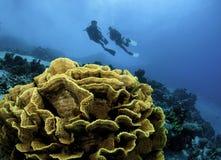 Gele koraal en scuba-duikers Royalty-vrije Stock Foto's