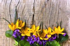 Gele krokus Stock Afbeelding
