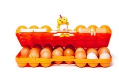 Gele kuikenzitting op deksel van container dragende eieren Stock Afbeeldingen