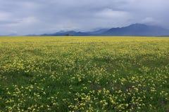 Gele landbouwbedrijfweide Royalty-vrije Stock Foto's