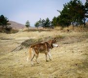 Gele landschapszand en bomen wilde hond Royalty-vrije Stock Afbeeldingen