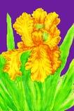 Gele lis, het schilderen Stock Fotografie