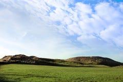 Gele lis op een links golfcursus in Ierland stock afbeelding
