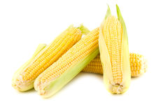 Gele maïskolven royalty-vrije stock afbeeldingen