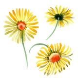 Gele madeliefje bloemen botanische bloem Waterverf achtergrondillustratiereeks Geïsoleerd daisybushes illustratieelement royalty-vrije illustratie