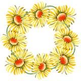Gele madeliefje bloemen botanische bloemen Waterverf achtergrondillustratiereeks Het ornamentvierkant van de kadergrens stock illustratie