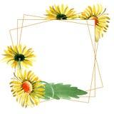 Gele madeliefje bloemen botanische bloemen Waterverf achtergrondillustratiereeks Het vierkant van het het kristalornament van de  royalty-vrije illustratie