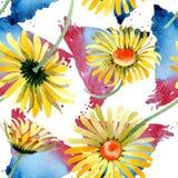 Gele madeliefje bloemen botanische bloemen Waterverf achtergrondillustratiereeks Naadloos patroon als achtergrond vector illustratie