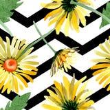 Gele madeliefje bloemen botanische bloemen Waterverf achtergrondillustratiereeks Naadloos patroon als achtergrond royalty-vrije illustratie