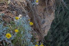 Gele mediterrane bloem Stock Afbeelding