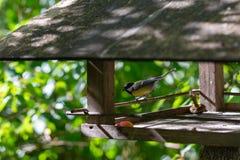 Gele meesvogel in de parkvoeder royalty-vrije stock afbeeldingen