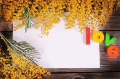 Gele mimosa op houten raad Royalty-vrije Stock Fotografie