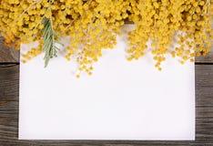 Gele mimosa op houten raad Stock Afbeelding