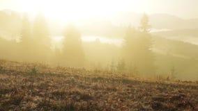 Gele Mist in de Beboste Bergen stock videobeelden
