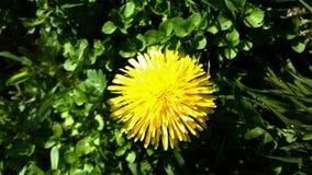 gele mooie bloem Stock Afbeelding