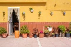 Gele muur met bloempotten Stock Fotografie